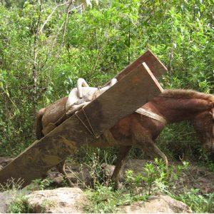 Así-transportaban-troncos-y-demás-2