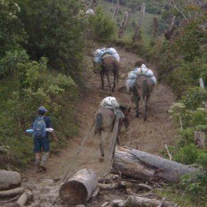 Así-transportaban-troncos-y-demás