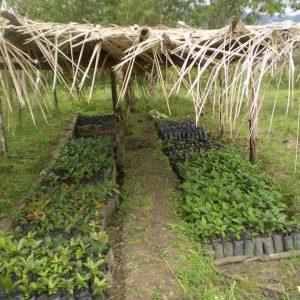 En-nuestros-viveros-de-especies-autóctonas-para-reforestar-2