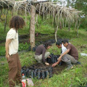 En-nuestros-viveros-de-especies-autóctonas-para-reforestar-3